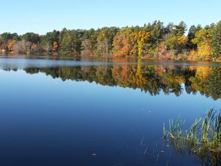 Robins Pond